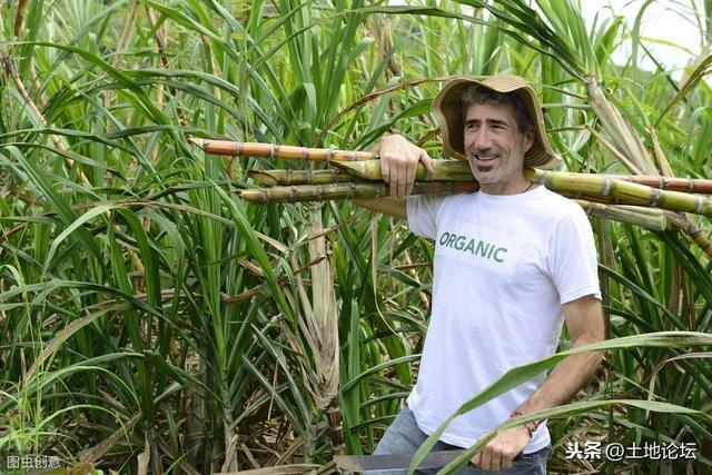 一个县的美国农民就能养活3亿人?真有这么猛?