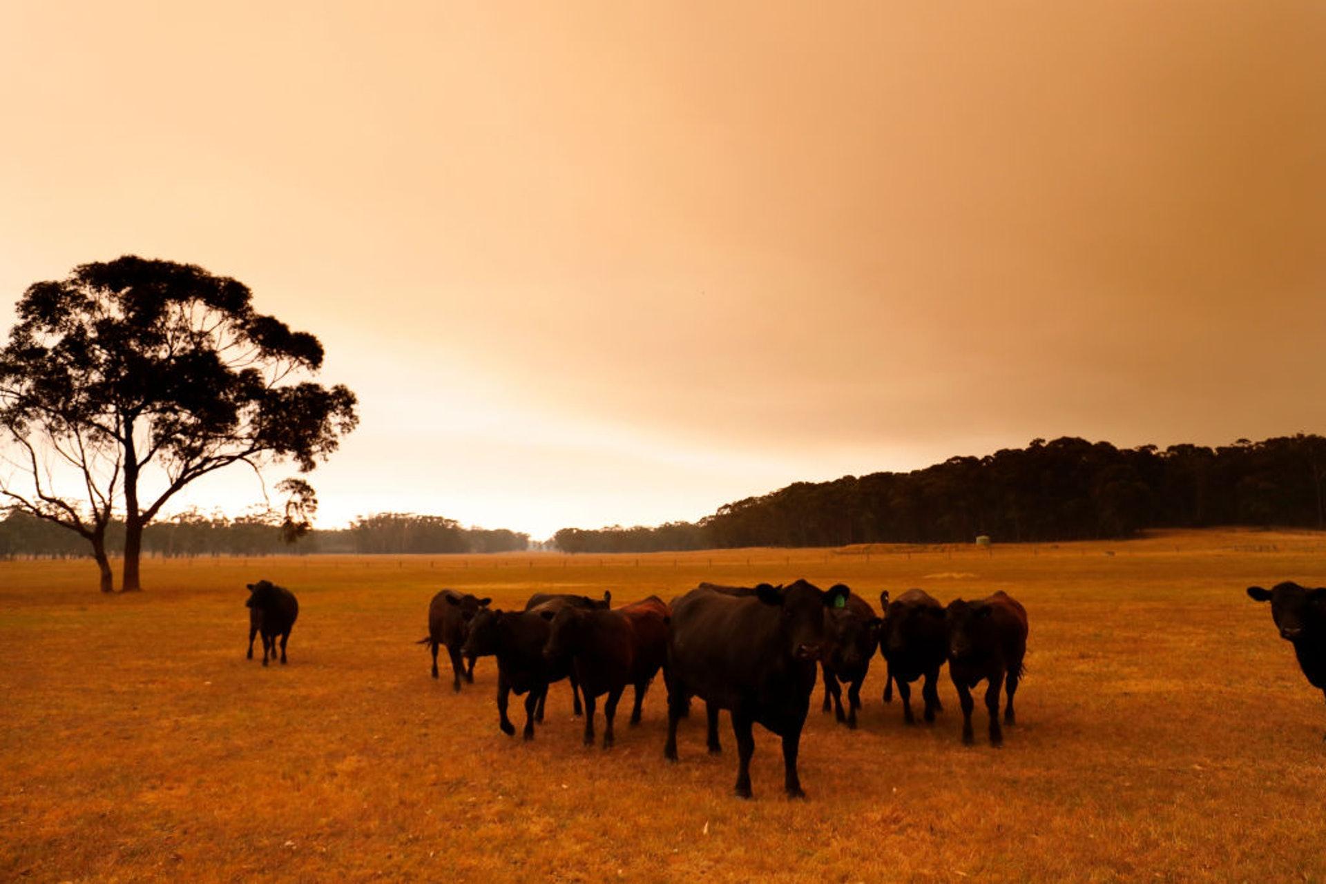衛星圖:澳洲煙霧已接近繞地球一周返回澳洲(組圖)