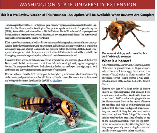 華盛頓州立大學網站上關於大虎頭蜂的信息。