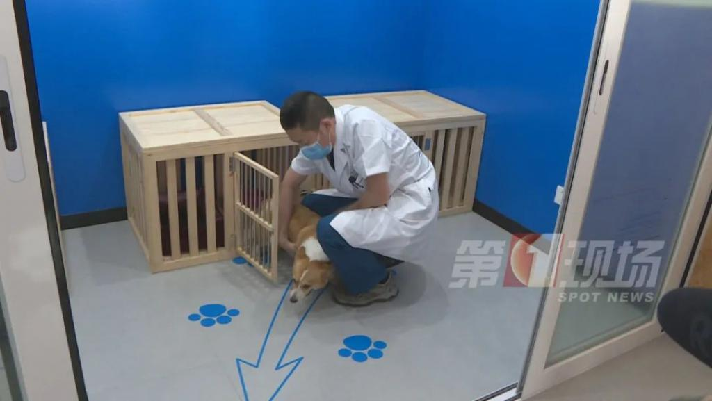 这个市要为所有狗狗注射芯片 到底有什么用?