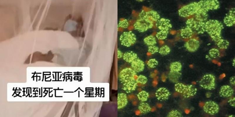 """10年前就爆发过!中国""""新型布尼亚病毒""""内幕曝光"""