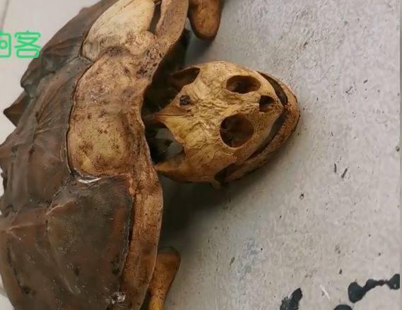 凄惨一幕:武汉大学生8个月没回宿舍 宠物龟变这样…