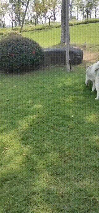 姑娘遛弯,狗总在同个地方狂叫!竟发现…