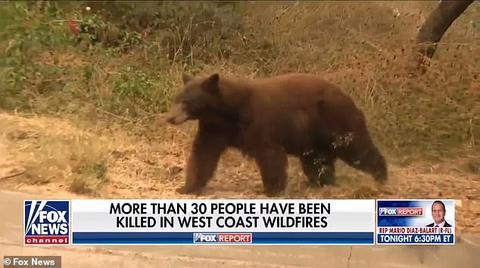 美国女记者正直播 一只熊飞奔而来 结局出人意料!