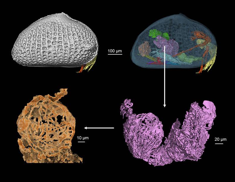 """""""巨精""""封存琥珀1亿年!科学家发现世上最古老精子"""