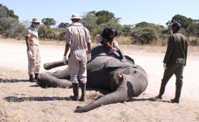 """数百头非洲象离奇死亡,如今终于""""破案"""" 真相是"""