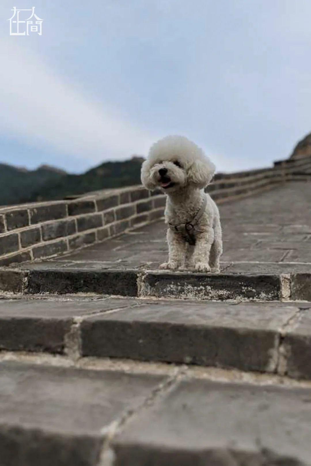 被一纸美签困住的中国留学生:放弃留美,改道香港