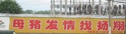 """公路标语为啥都写""""母猪发情找扬翔""""?扬翔是谁?"""