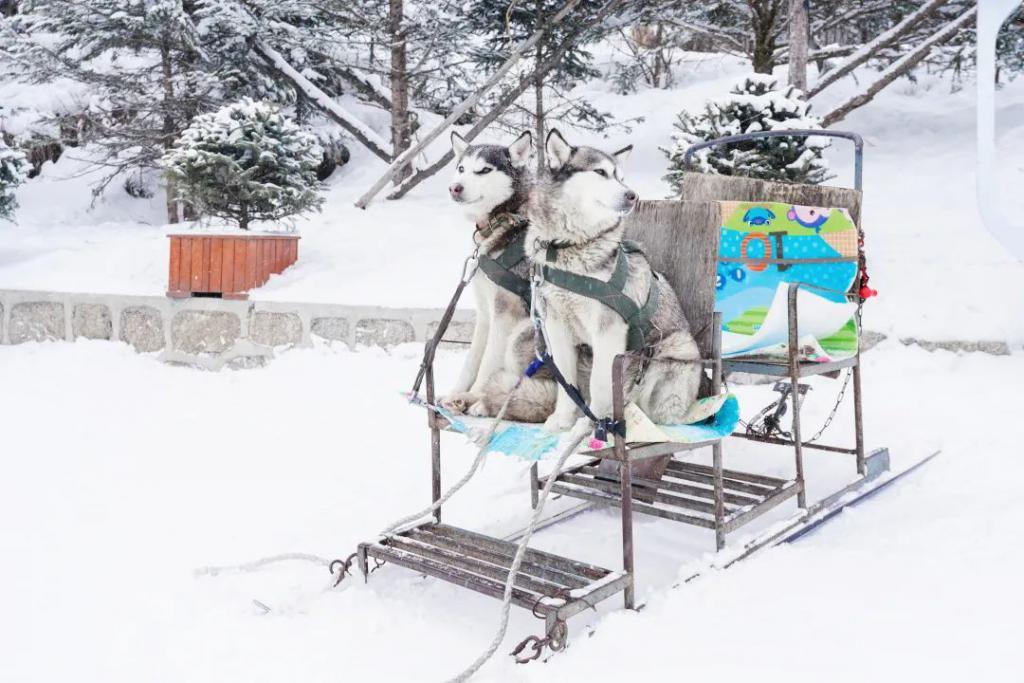 哈尔滨有多冷?连共享单车都要冬眠