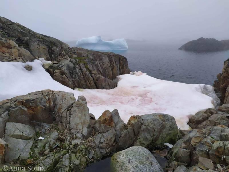 糟糕!南极已成了这般模样!地球快要失控了!