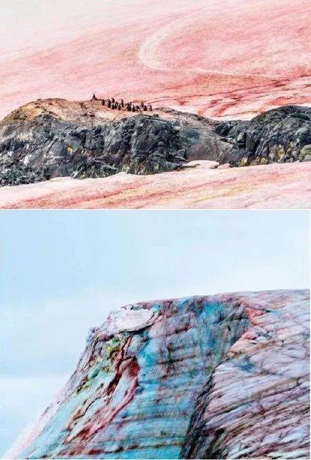 """警惕!南極驚現""""西瓜雪"""",但這一點也不浪漫..."""
