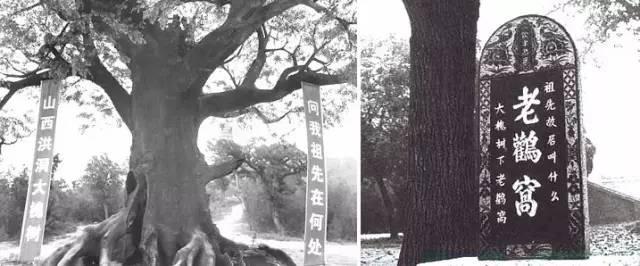 为什么中国北方人的祖籍大多都出自这个地方?