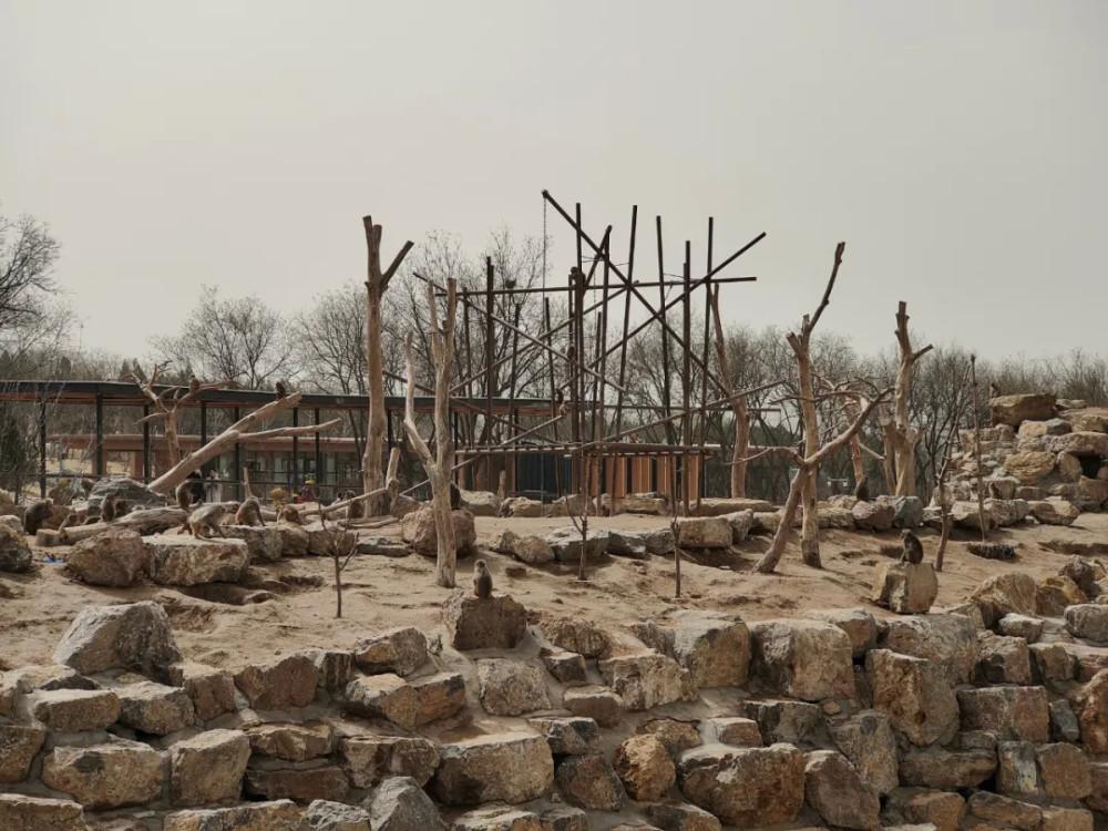 砸30億改造的太原動物園,中看不中用?