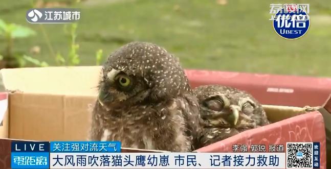 清晨开窗两个萌宝探头,竟是国家二级保护动物!