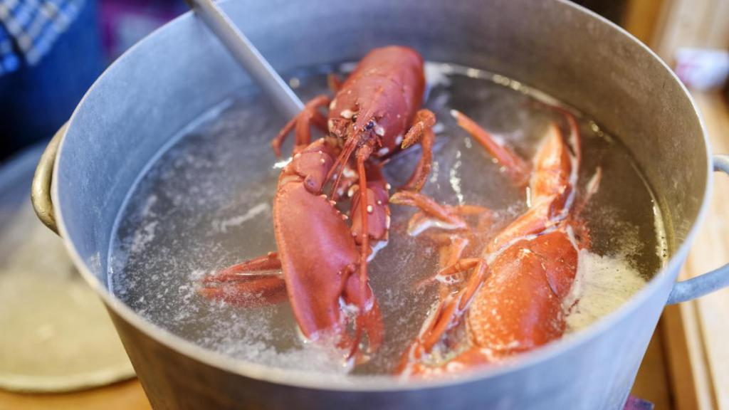 不人道!怕龙虾疼,英国计划禁止烹煮活龙虾