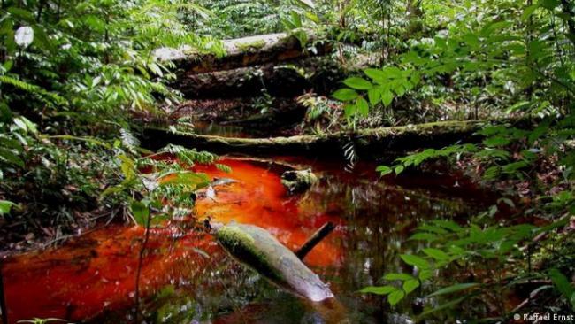"""""""僵尸蛙""""——科学家在亚马逊发现的新物种"""