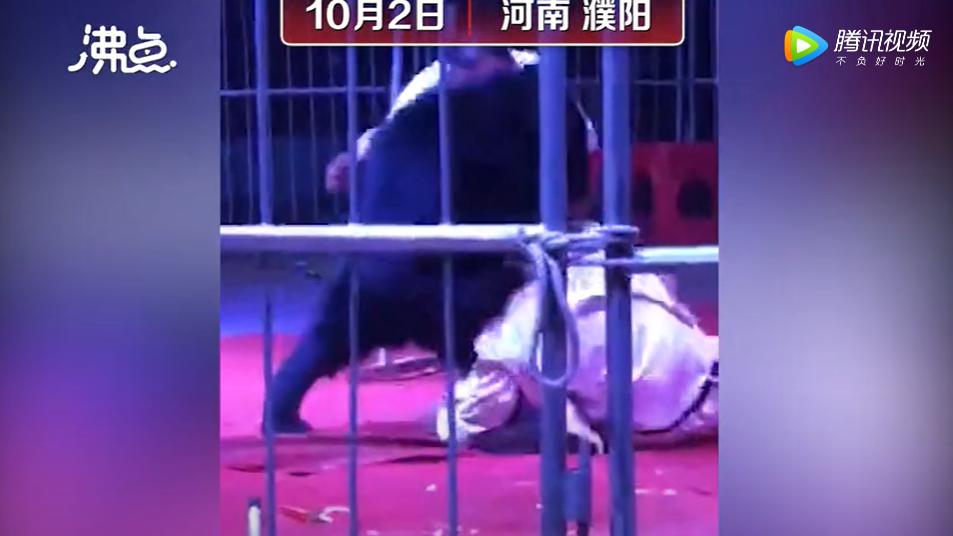 河南驯兽师遭熊咬数分钟仅轻伤:熊牙早就锯了…