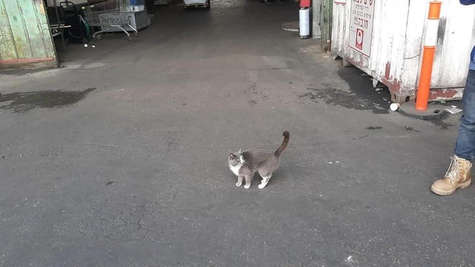 """小貓溜進貨櫃橫渡上千公裏還偷吃糖果 上岸""""居家檢疫"""""""
