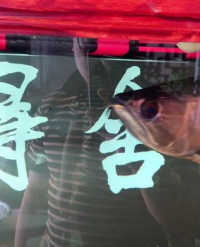 石家庄疫情封闭 男子清蒸鱼缸里三千元观赏鱼解馋
