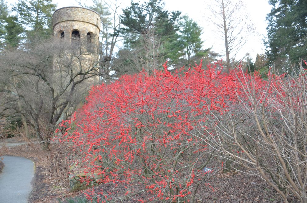 Longwood 公园的四季:圣诞灯饰