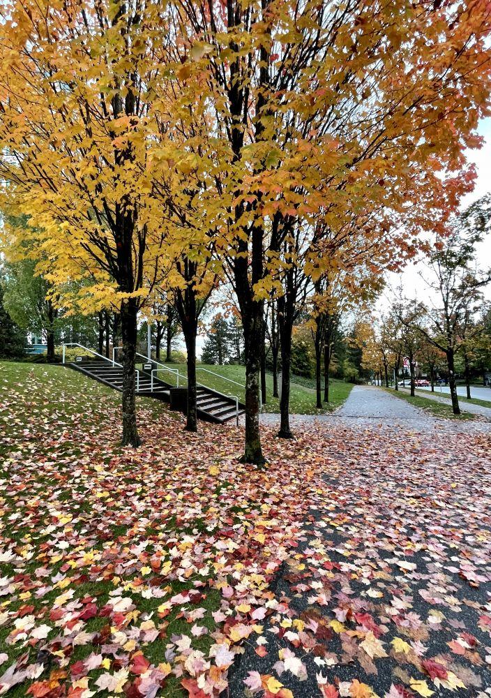 温哥华的秋天
