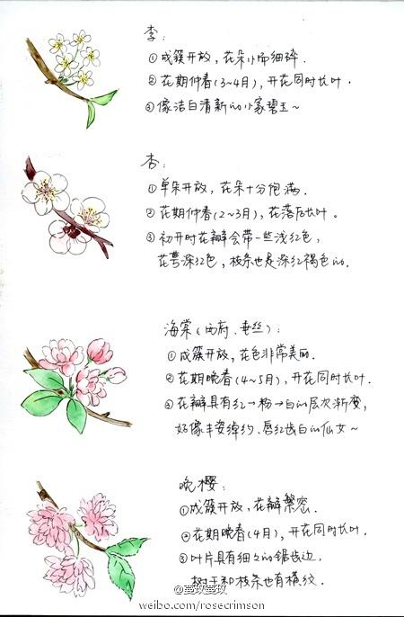 如何区别桃花、杏花、李花、樱花、梨花和梅花?